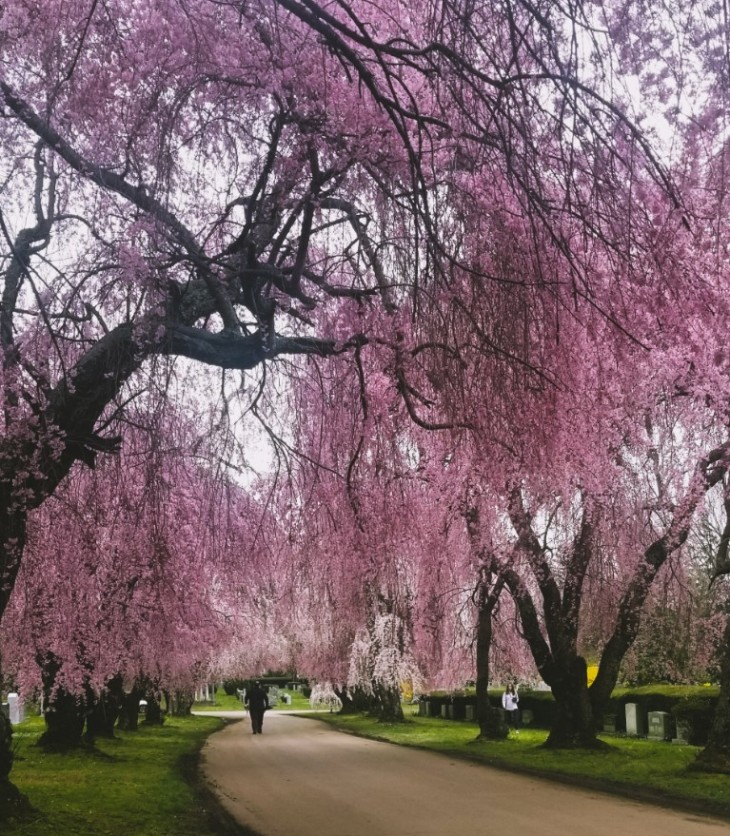 Lexington Cemetery Mary Horsley It Could Be Worse